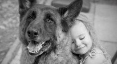 temperamento cachorro