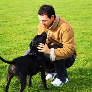 Seja líder do seu cão
