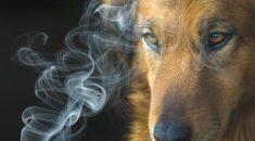 cachorro cigarro