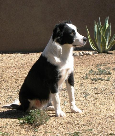 Cachorro no quintal