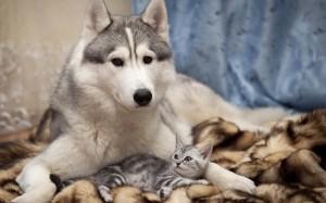 cachorroegato