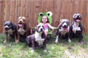 Criança cercada por Pit Bulls