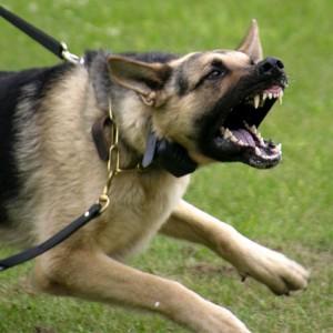 cachorro agressividade