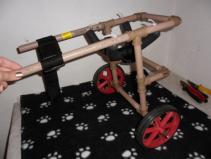 cadeira de rodas para caes 12