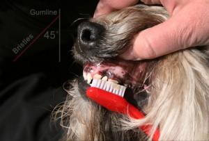 como escovar os dentes do cachorro 5