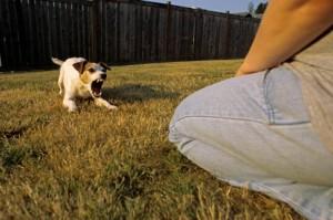 cachorro com medo de estranhos