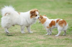 Socializar cães pequenos