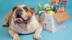 dogbox dogzen