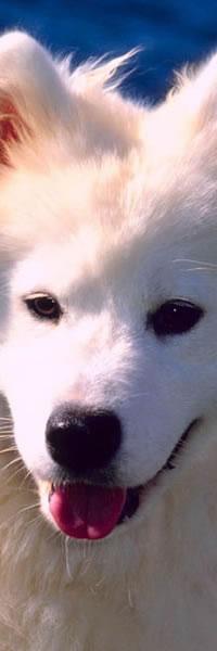nomes de cachorro 3