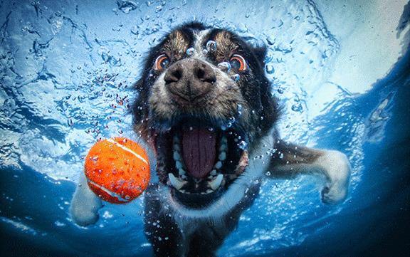 cachorro embaixo da água
