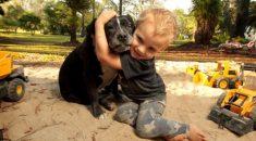 Alexander-Kenney-leala-cadela-salva