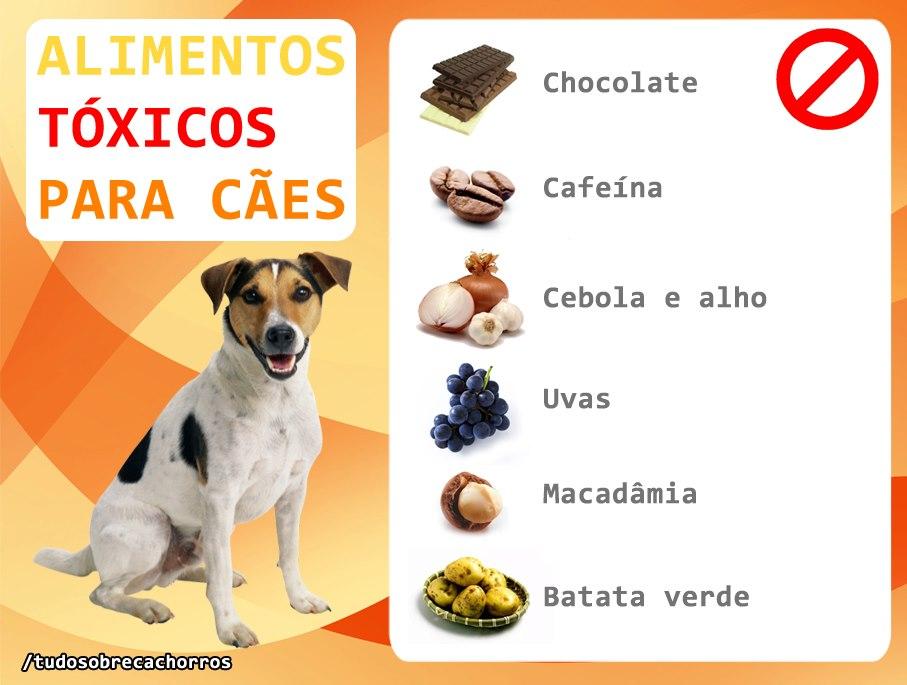 Alimentos tóxicos para cães