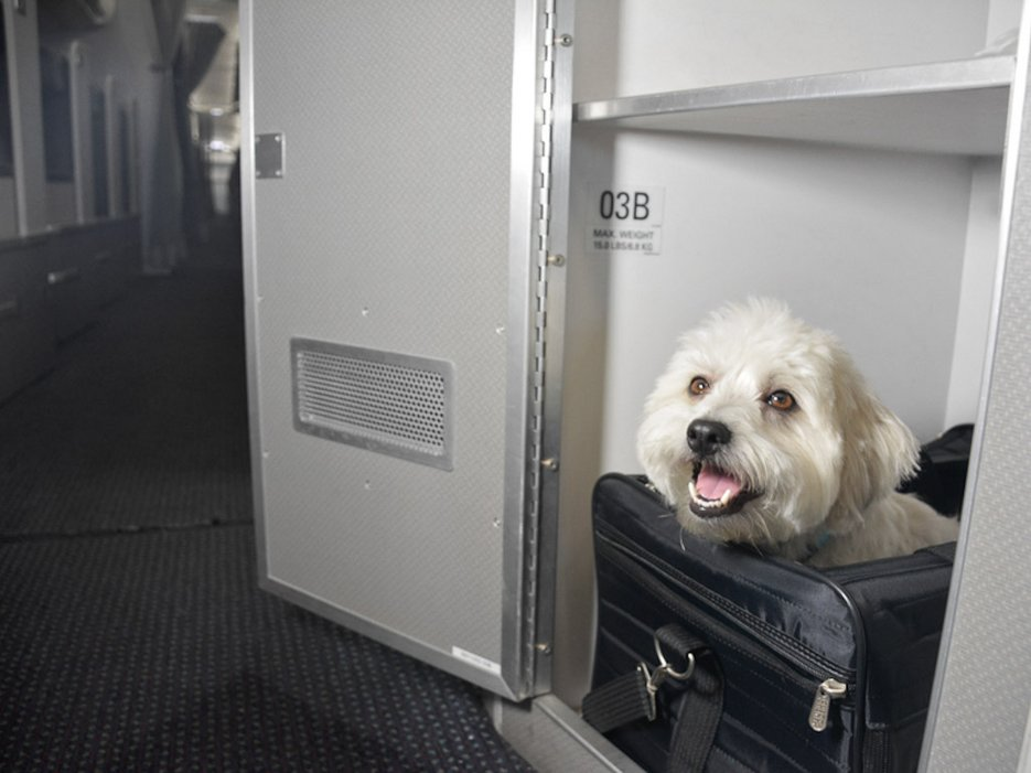 american-airlines-cabine-caes-gatos-aviao