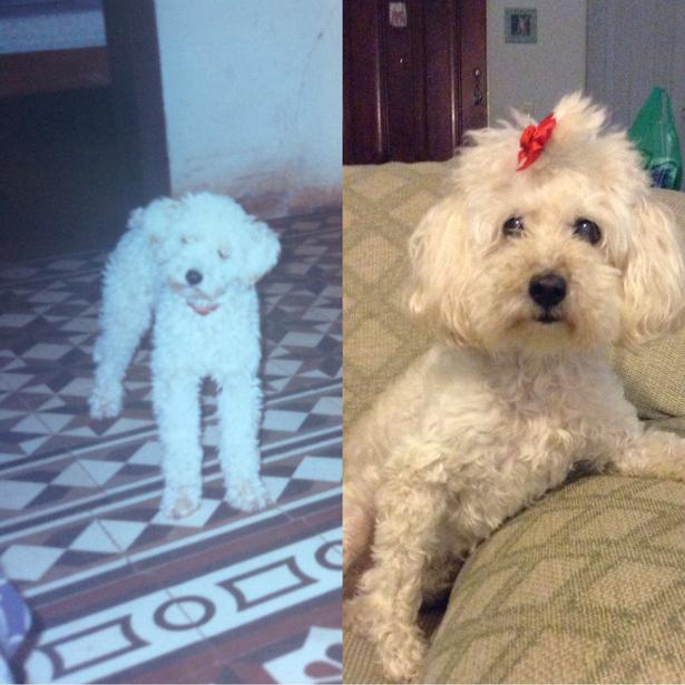 Minnie, da Ana Maria. 2 anos / 18 anos.