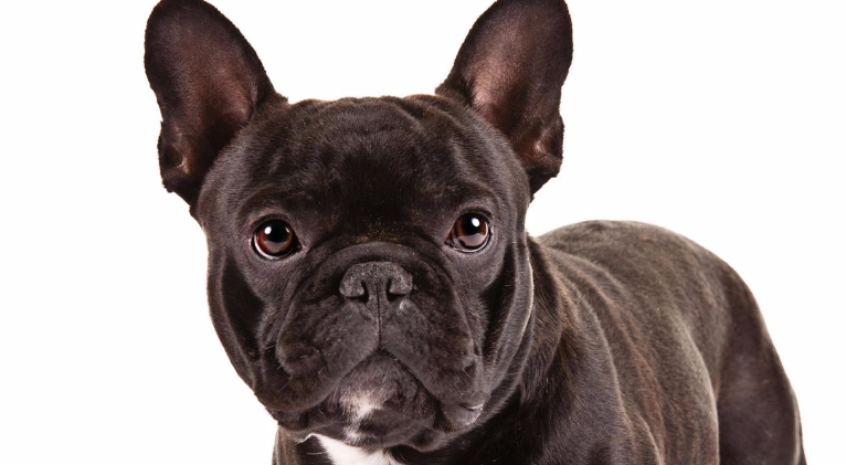 Dog Eared Flat Roman Shade