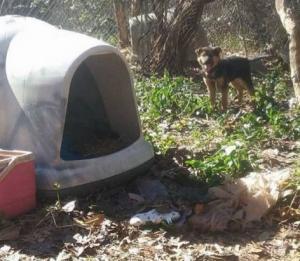 cachoro-que-passou-a-vida-acorrentada-vai-para-dentro-de-casa-pela-primeira-vez-01
