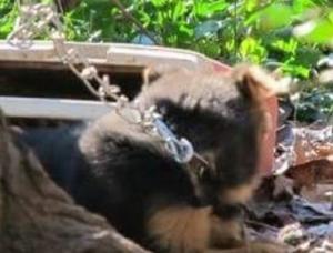 cachoro-que-passou-a-vida-acorrentada-vai-para-dentro-de-casa-pela-primeira-vez-02
