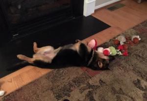 cachoro-que-passou-a-vida-acorrentada-vai-para-dentro-de-casa-pela-primeira-vez-04