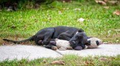 Cachorro-abandonado-encontra-conforto-em-ursinho-de-pelúcia