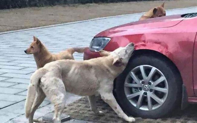 cachorro-agredido-por-motorista-volta-com-amigos-para-se-vingar