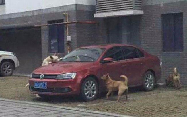 cachorro-agredido-por-motorista-volta-com-amigos-para-se-vingar-03