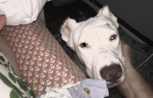 cachorro-que-vivia-assustado-acorda-no-meio-da-noite-para-agradecer-a-sua-salvadora-03