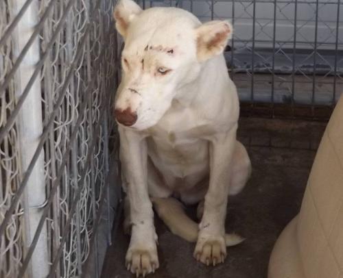 cachorro-que-vivia-assustado-acorda-no-meio-da-noite-para-agradecer-a-sua-salvadora