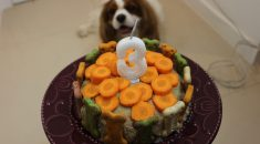 receita-bolo-cachorro