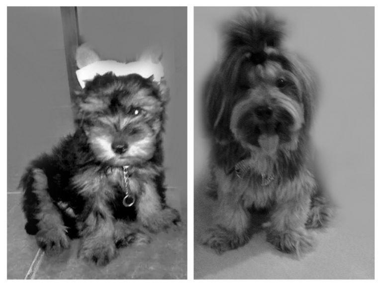 Ozzy, da Isadora. 3 meses / 5 anos