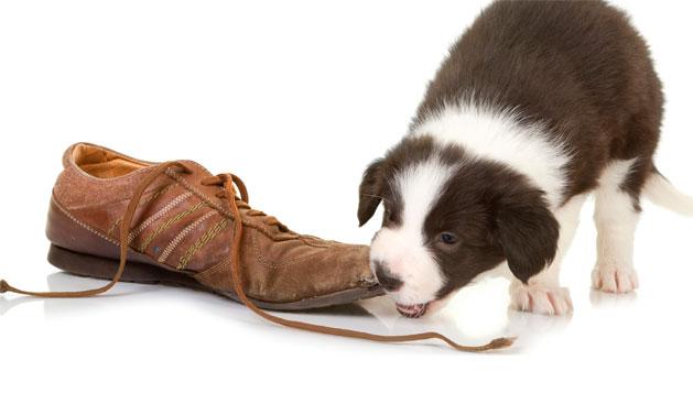 melhorar-o-comportamento-do-cachorro-12