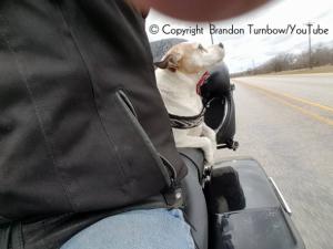 Motociclista-salva-cachorro-abandonado-na-estrada-e-faz-dele-seu-novo-copiloto-04