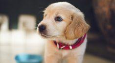 acostumar-cachorro-nome