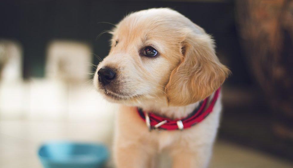 Tem Na Web - Como acostumar o cachorro com o nome