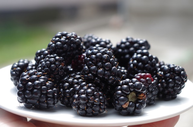 alimentos-que-previnem-o-cancer-em-caes-amora