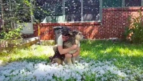 amigos-unem-forcas-para-que-cachorro-doente-possa-ver-neve-pela-ultima-vez-04