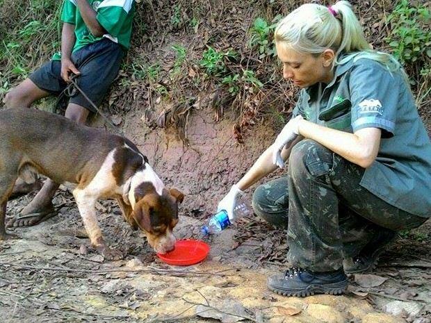 animais resgatados mariana