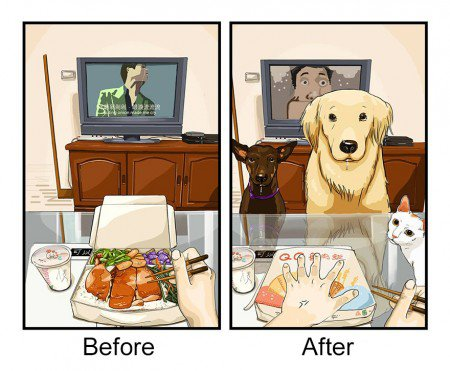antes e depois pet 3