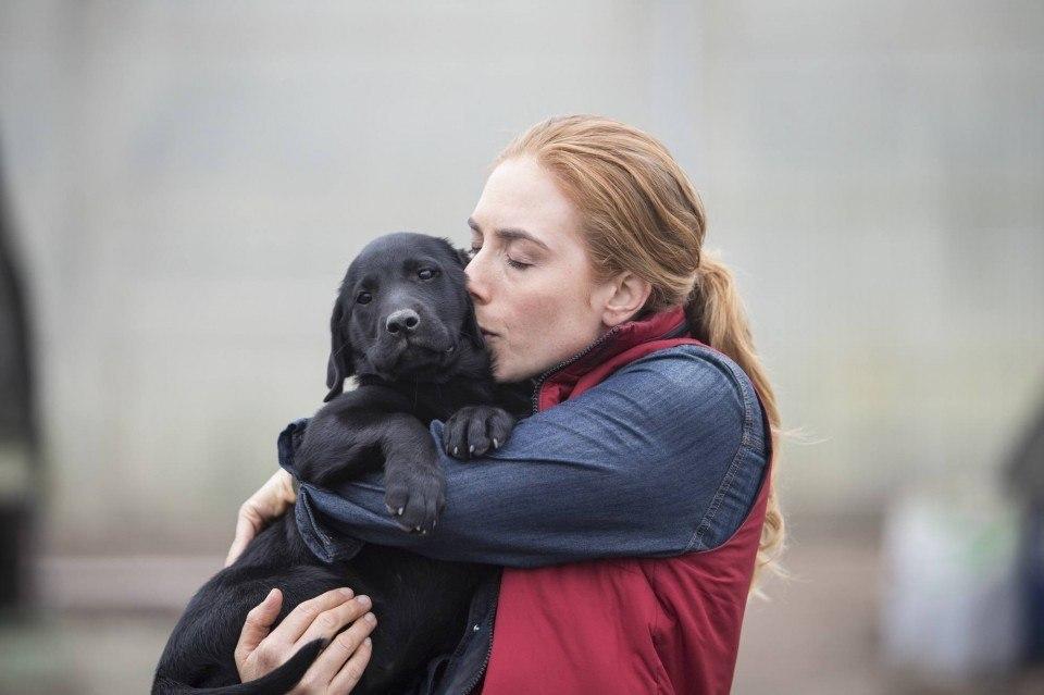beijo-carinho-dono-cachorro