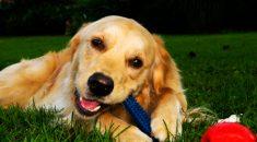 brinquedos perigosos e seguros pra cachorro