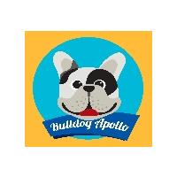 Bulldog Francês Apollo
