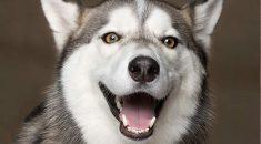 cães riem