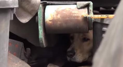 cachorra-medo-resgate-reacao-incrivel