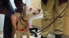cachorrinho ve os donos depois de cirurgia