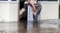cachorro-é-abandonado-durante-enchente-mas-sobrevive-ao-ser-resgatado-por-outro