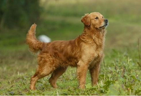 Ama dominante con perro - 5 5