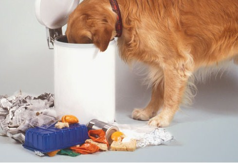 cachorro-comida-estragada