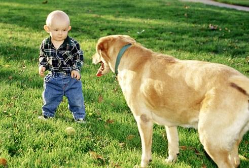 cachorro-criancas
