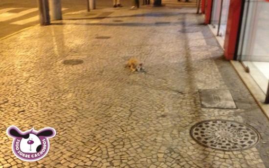 cachorro-deitando-no-passeio