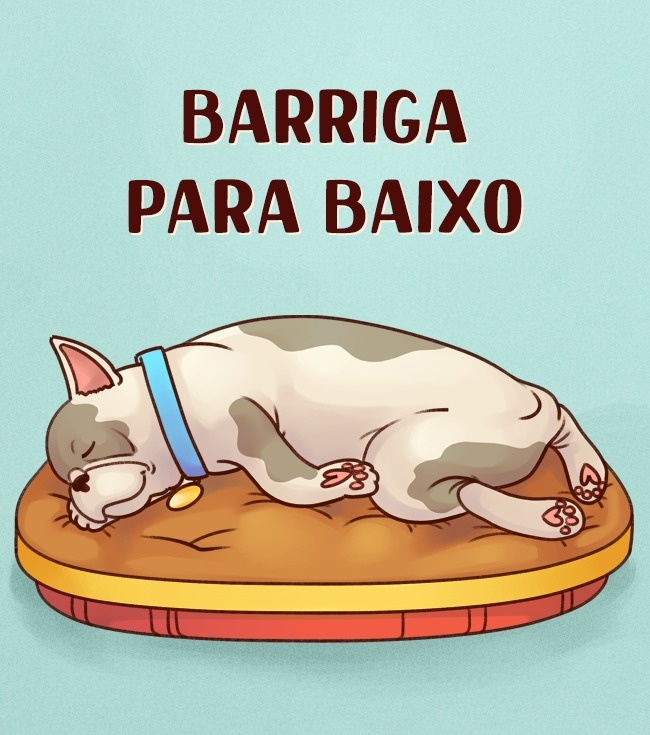 cachorro-dormindo-de-barriga-pra-baixo