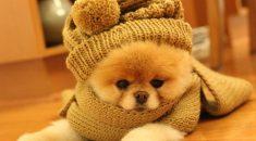 cachorro frio inverno